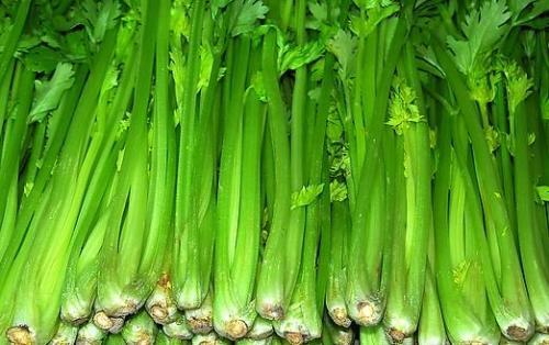 芹菜的功效 常吃芹菜具有平肝降压的功效